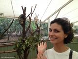 Morena Baccarin - TwitPics in Australia with a Koala - Nov 13, 2012 (x2)